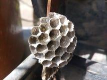 Nid, guêpe, vespula, guêpes, nid d'abeilles, vespiary, parasite, nature, plan rapproché, jaune, papier, animal, maison, sauvage,  image stock