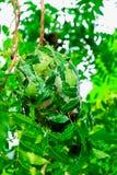 Nid rouge de fourmi Photo libre de droits