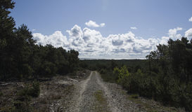 Nida landscape stock photos