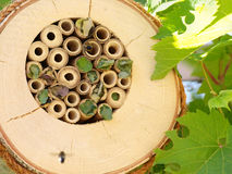 Nidal de la abeja Imagenes de archivo