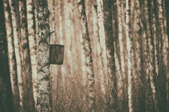 Nidal en el bosque Imagen de archivo libre de regalías