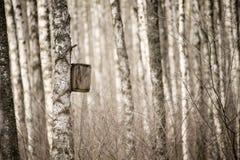 Nidal en el bosque Fotografía de archivo libre de regalías