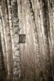 Nidal en el bosque Foto de archivo libre de regalías
