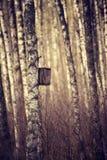 Nidal en el bosque Foto de archivo
