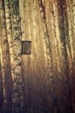 Nidal en el bosque Imagen de archivo