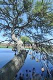 Nidi degli uccelli sopra acqua fotografia stock libera da diritti