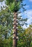Nidi dell'uccello in un albero alto Fotografia Stock