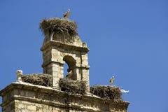 Nidi della cicogna nella vecchia campana Torrelaguna Fotografia Stock Libera da Diritti