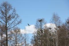 Nidi delle gru contro il cielo blu Fotografia Stock Libera da Diritti