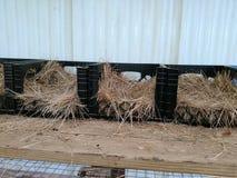 Nidi per deporre le uova nella gabbia Fotografie Stock