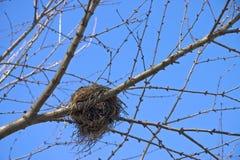 Nido 01 dell'uccello Fotografie Stock