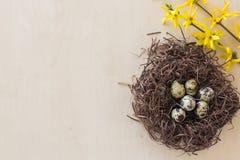 Nido con le piccole uova Fotografia Stock