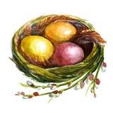 Nido con le uova Immagini Stock