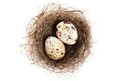 Nido con le uova Immagini Stock Libere da Diritti