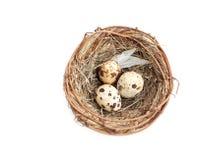 Nido con le uova di quaglie Immagini Stock