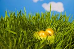 Nido con le uova dorate Immagine Stock