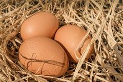 Nido con tre uova Fotografia Stock Libera da Diritti