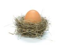 Nido degli uccelli con l'uovo Fotografia Stock Libera da Diritti