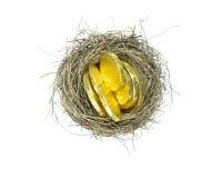 Nido degli uccelli con le monete Immagini Stock Libere da Diritti