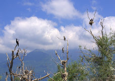 Nido degli uccelli sugli alberi morti Fotografia Stock