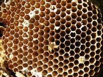 nido del calabrone Fotografia Stock