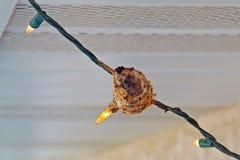 Nido del colibrì Immagini Stock