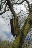 Nido del gufo sull'albero Immagini Stock