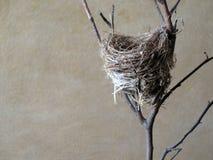 Nido del piccolo uccello. Fotografie Stock Libere da Diritti