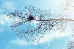 Nido del ` s dell'uccello contro il cielo sull'albero nudo Immagini Stock Libere da Diritti
