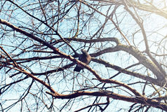 Nido del ` s dell'uccello contro il cielo sull'albero nudo Immagine Stock