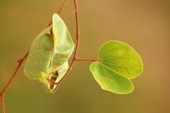 Nido del ` s della formica fotografie stock libere da diritti