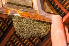 Nido dell'ape al tempio di legno Fotografie Stock