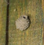 Nido dell'insetto Fotografia Stock