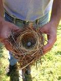 Nido dell'uccello Fotografie Stock