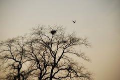 Nido dell'uccello in alberi Immagini Stock Libere da Diritti