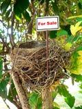 Nido dell'uccello - bene immobile 7 Fotografie Stock