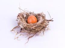 Nido dell'uccello con l'uovo isolato su fondo bianco Fotografia Stock Libera da Diritti