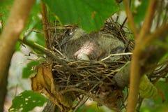 Nido dell'uccello con un uovo nel cespuglio Fotografia Stock