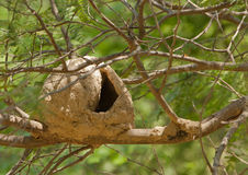 Nido dell'uccello di Hornero Fotografia Stock Libera da Diritti