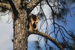 Nido dell'uccello fatto di argilla su un albero Fotografia Stock