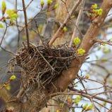 Nido dell'uccello per affitto Fotografia Stock Libera da Diritti