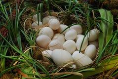 Nido dell'uovo Fotografia Stock