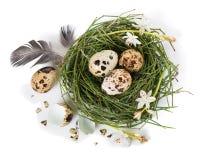 Nido dell'uovo di Pasqua, vista superiore Fotografie Stock Libere da Diritti