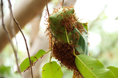 Nido della formica Immagini Stock Libere da Diritti