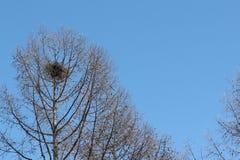 Nido della gru contro il cielo blu in primavera Fotografie Stock