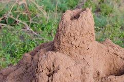 Nido della termite Immagini Stock Libere da Diritti