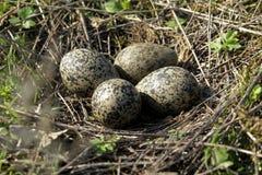Nido delle uova Immagine Stock Libera da Diritti