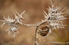 Nido delle vespe sul cardo selvatico Fotografia Stock Libera da Diritti
