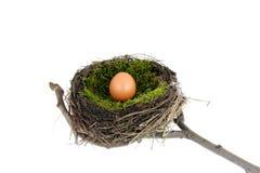 Nido di Pasqua Immagini Stock