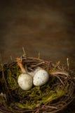 Nido di primavera Fotografia Stock Libera da Diritti